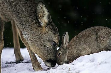 鹿とウサギ